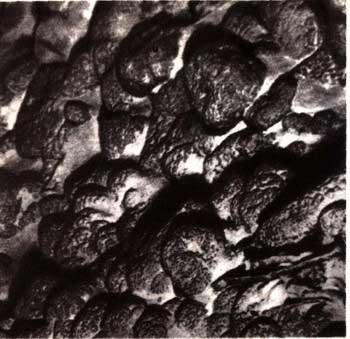 Электронная энциклопедия *Земля* 1730-1.jpg
