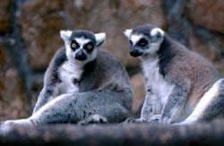 Китай Гонконг: Зоологический и Ботанический сады