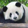 Китай Пекин: Пекинский зоопарк
