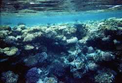 Израильская мозаика. Синай. Под водой.
