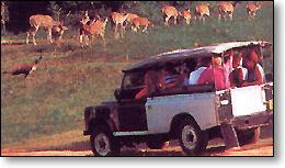 национальный парк ЯЛЛА