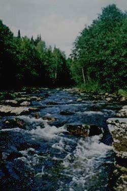 Заповедник БАСЕГИ - река Порожняя