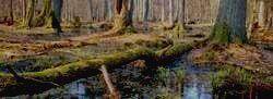 Дремучие леса Беловежья