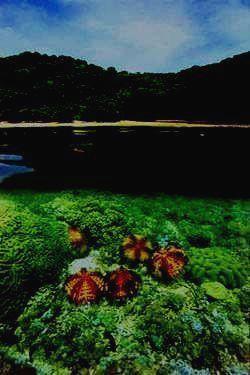 Райское сочетание земных и подводных красот