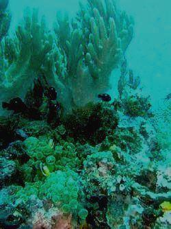 Загадочный подводный мир Комодо
