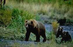 Заповедник НУРГУШ - медведь