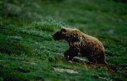 Заповедник ЭРЗИ - медведь