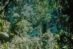 BWINDI IMPENETRABLE - пейзаж