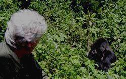 MGAHINGA - наблюдение за гориллами