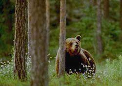 БАЙКАЛО-ЛЕНСКИЙ ЗАПОВЕДНИК - медведь