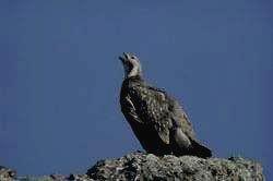 Национальный парк АЛАНИЯ - улар