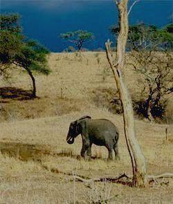Вид из корзины шара - слон
