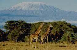 Вид на великую гору Африки.