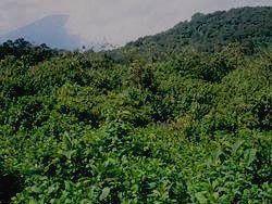 Вид на горы Вирунга
