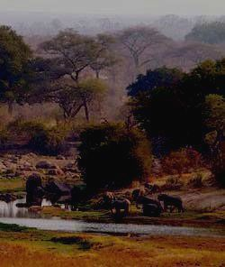 Стадо слонов на водопое.