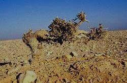 Пустынный пейзаж Азрака