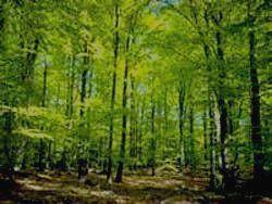Лушаньский лес