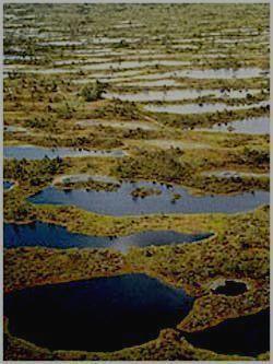 Знаменитые черные болота