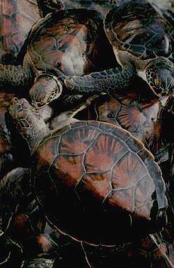 Парк знаменит огромным количеством черепах, обитающих в нем