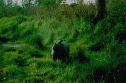 Виды Национального Парка Бардиа
