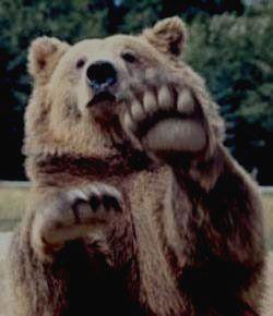 Грозный житель леса - бурый медведь