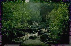 Во влажных лесах Парка