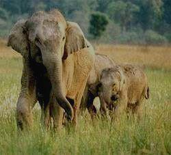 Дикие слоны в Парке