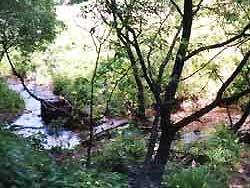 Река Битца