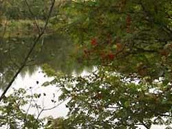Река Суда