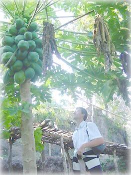 Авокадо в горном лесу