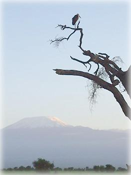 Одинокий марабу провожает закат на фоне Килиманджаро