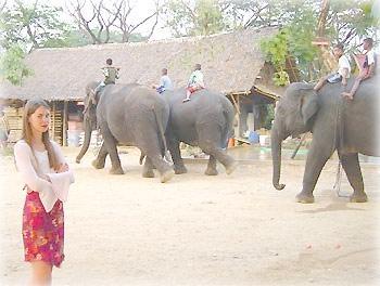 Слоны возвращаются